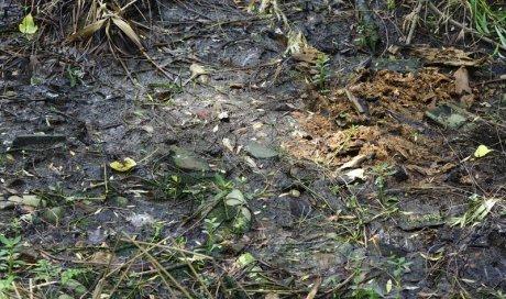 Diagnostic sites sols pollués Toulouse